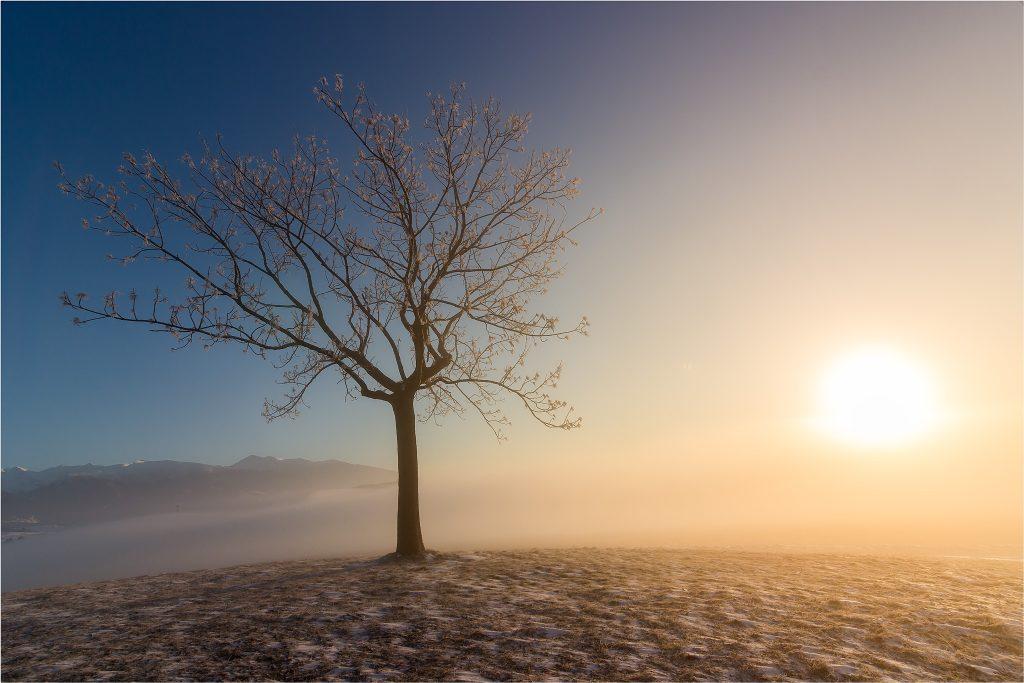 Strom v rannom svetle